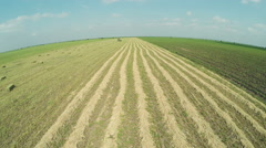 Drone shot over harvesting and baling alfalfa or Lucerne with tractor Stock Footage