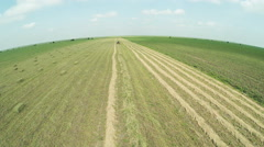 Drone shot over harvesting and baling alfalfa or Lucerne with tractor - stock footage
