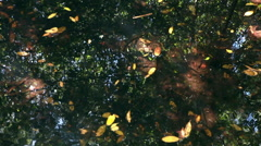 Stock Video Footage of Slow, downward pan of water in a bright, swampy area with leaves and