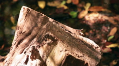 Static closeup of a stump in a bright, swampy area. Stock Footage