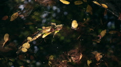 Static, closeup of leaves in the water in a bright, swampy area. Stock Footage