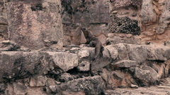 Static shot of an iguana on ancient stone. Stock Footage
