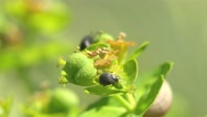 Stock Video Footage of Snail ant bug insect in forest