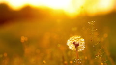 spring landscape at sunset - stock footage