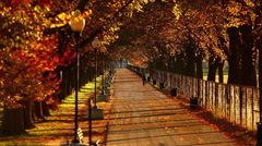 Static shot of a tree-lined walkway at the National Mall along the reflecting Stock Footage