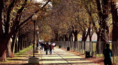 Shot of tree-lined walkway where many people pass, at the National Mall in Stock Footage