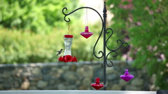 Static view of  humming bird flying around feeders. Stock Footage