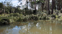 View of the jungle from canoe floating down the river. Stock Footage