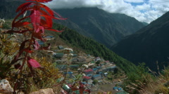 White flowers in the wind on the slopes above Namche Bazaar in Nepal. Stock Footage