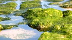 Sea Algae Stock Footage