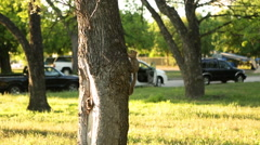 Squirrel climing a tree. Stock Footage