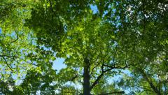green oak forest, panorama - stock footage