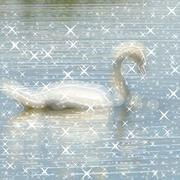 Swan on pond glowing background Piirros