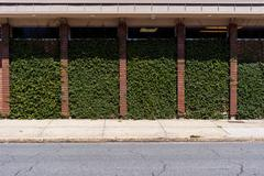 Stock Photo of Hedge wall