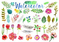 Vector watercolor aquarelle flowers and leaves. Stock Illustration