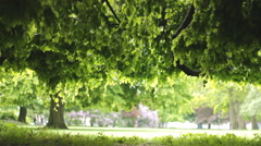 View through and under the tree leaf and branches 2 Stock Footage