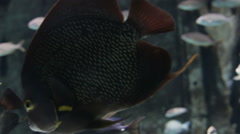 Fish swimming in an aquarium, different types of fish. - stock footage