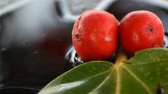 Ficus racemosa Stock Footage