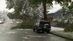 Snow damaged tree pan, snow falling pan Stock Footage