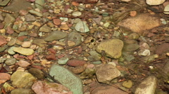 Water Bug Stock Footage
