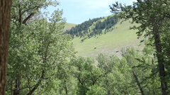 Tilt Down from Mountain to Fast Flowing River in Missoula, Montana Stock Footage