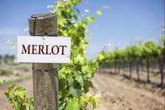 Merlot Sign On Post at the End of a Vineyard Row of Grapes. Stock Photos