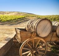 Grape Vineyard with Vintage Barrel Carriage Wagon. - stock photo