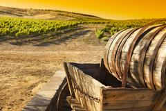 Grape Vineyard with Vintage Barrel Carriage Wagon. Stock Photos