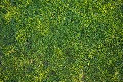Beautiful Green Grass Background Texture in the Afternoon Sun. Stock Photos