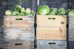 Fresh Fall Green Gourds and Crates in a Rustic Outdoor Fall Setting.. Stock Photos