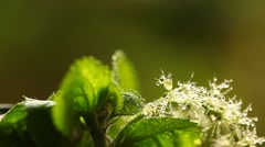 Water drop on the Leaf Stock Footage
