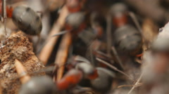 Stock Video Footage of Ants working in ant hill. 4K UHD.