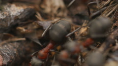 Ants working in ant hill. 4K UHD. - stock footage