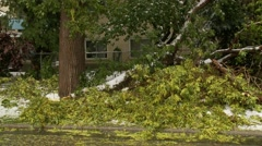 Snowstorm disaster, snow damaged tree, sequence with zoom back Stock Footage