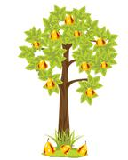 Tree with pear Stock Illustration