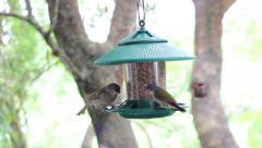 Bird Feeder in a Knysna Garden Stock Footage