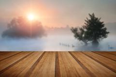 Familyof swans swim across misty foggy Autumn Fall lake at sunrise with woode - stock photo