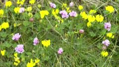 4K focusing in on yellow and pink flowers waving in the wind Stock Footage