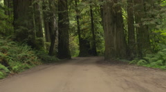 Driving on a dirt road through California redwoods - stock footage