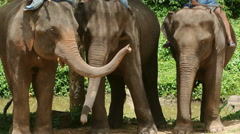 Elephant of Thailand - stock footage