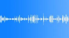 Blackbird cuckoo and other birds. Sound Effect