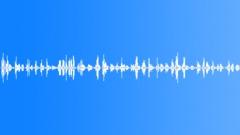 Blackbird Goldfinch Cuckoo. Forest Lake. Sound Effect