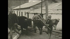 Stock Video Footage of Vintage 16mm film, Columbia 1938, cows hauling logs