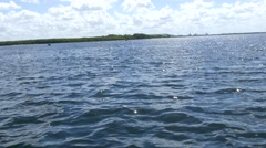 Stock Video Footage of Several dolphins swimming in Florida waters, 4K