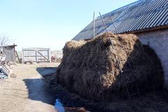 Heap of the dung besides the shed Stock Photos