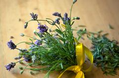 bouquet of freshly cut lavender - stock photo