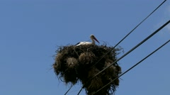 Stock Video Footage of 4K Portugal Stork Crane bird on pole