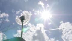 Dandelion  seed head flower bflow slow motion against blue sky 1080p FullHD v Stock Footage