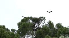 Slow Motion Portugal Stork Crane bird on pole Stock Footage