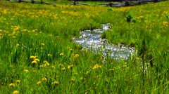 Fresh Spring Flowers Cool Mountain Stream Stock Footage